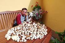 Nadílka hub z Třeboňska.