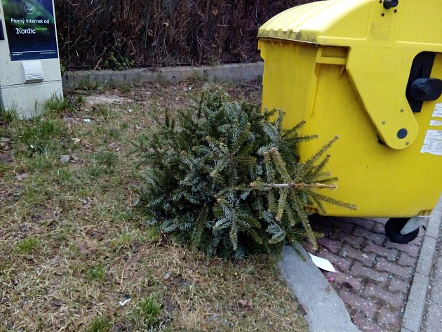 Použité vánoční stromky lidé odkládají u kontejnerů. Ilustrační foto.