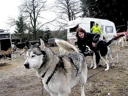 Na závod psích spřežení Českou Kanadou přijela se svými husky i Radka Novotná z Orlíku.