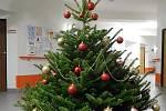 12. Vánoční strom v Domově seniorů v Třeboni.