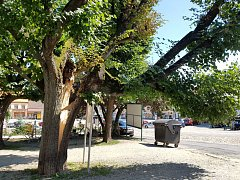 Na Palackého náměstí v Dačicích se rozlomila lípa.