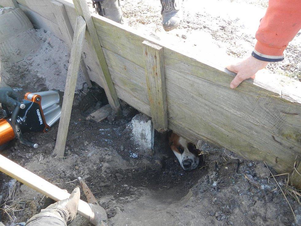 Hasiči pomáhali vyprostit psa zaklíněného pod chodníkem v Jarošově nad Nežárkou.