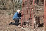 Iva Lapková Zelinová ze vsi Studnice na Jindřichohradecku si na důchod splnila svůj sen a chová velké kočkovité šelmy.