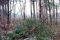V lesích teď není bezpečno. V důsledku námrazy hodně stromů popadalo a další jsou narušené. Pohled na situaci v Horním Poli u Studené.