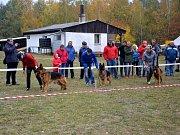 Kynologický klub v Jindřichově Hradci v sobotu pořádal Krajskou speciální výstavu německých ovčáků, kde se sešlo na pět desítek předváděných zvířat.