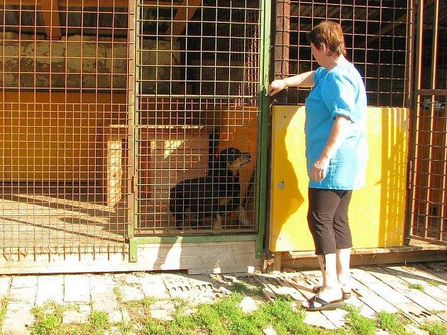O psy v jindřichohradeckém záchytném útulku se Libuše Rošteková (na snímku) stará každý den již tři roky.  Nemívá s nimi větší problémy, ale uhlídat jich třeba dvanáct je náročné.