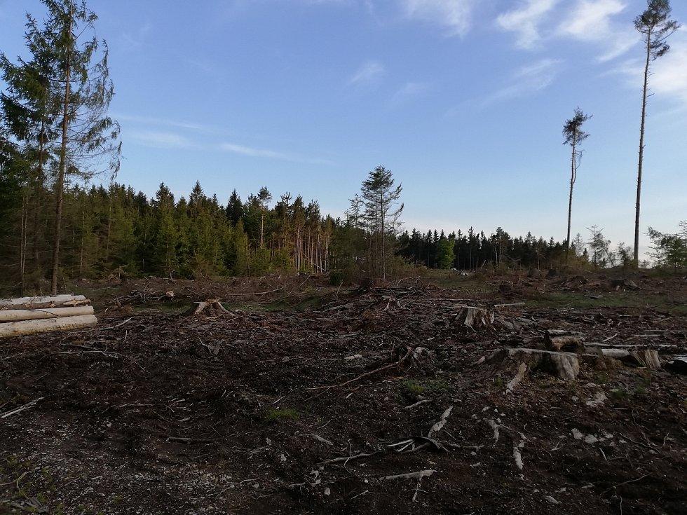 Kůrovcová kalamita. Místo lesa zůstala jen měsíční krajina. Ilustrační foto.