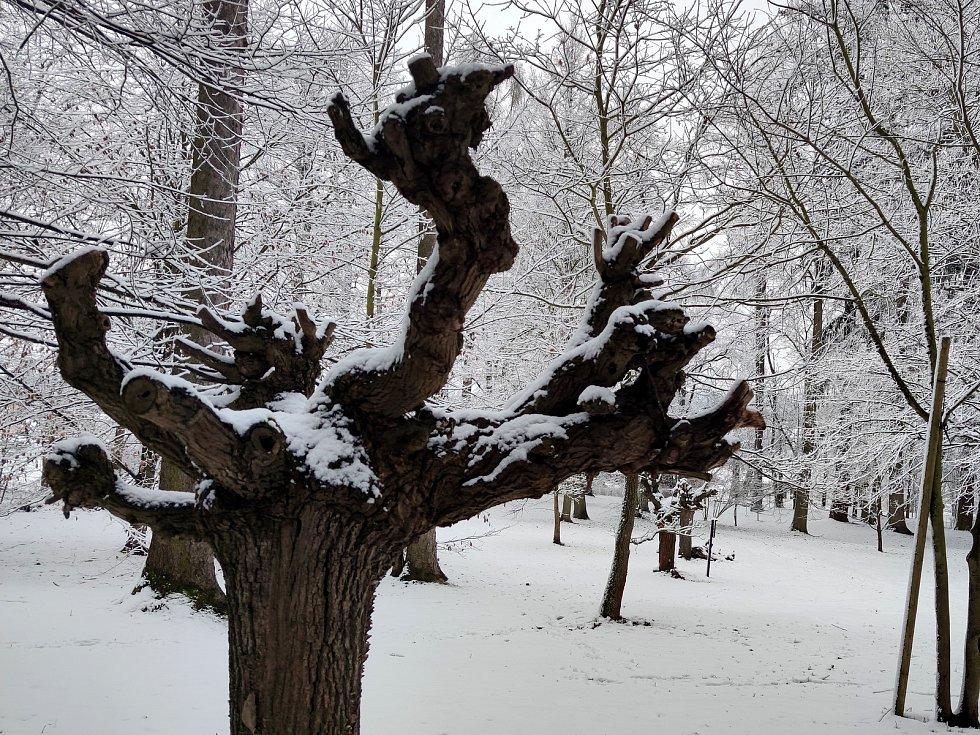 Park v Jindřichově Hradci, jehož součástí jsou Mertovy sady s kostelem svatého Jakuba, láká k vycházkám v každém ročním období. Na víkend se zima vrátila, tak se podívejte, jak vypadá zasněžený krásný kus přírody přímo ve městě.