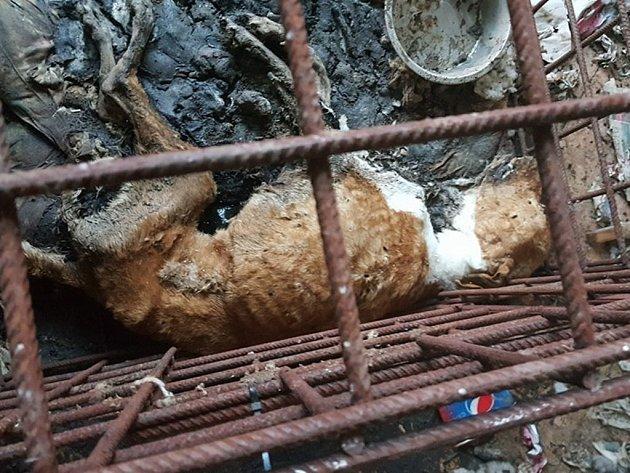 HRŮZNÝ POHLED. Psi v domě na Dačicku leželi mrtví v klecích ve vlastních výkalech.