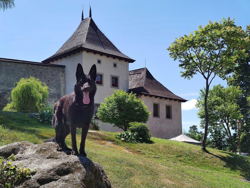 Oblíbeným cílem turistů v České Kanadě je hrad Landštejn.