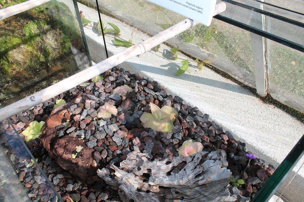Skleníková výstava Vodní a masožravé rostliny z celého světa v Botanické zahradě Třeboň.