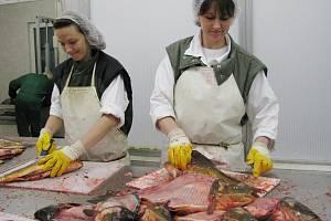 Zpracovna ryb v Třeboni.