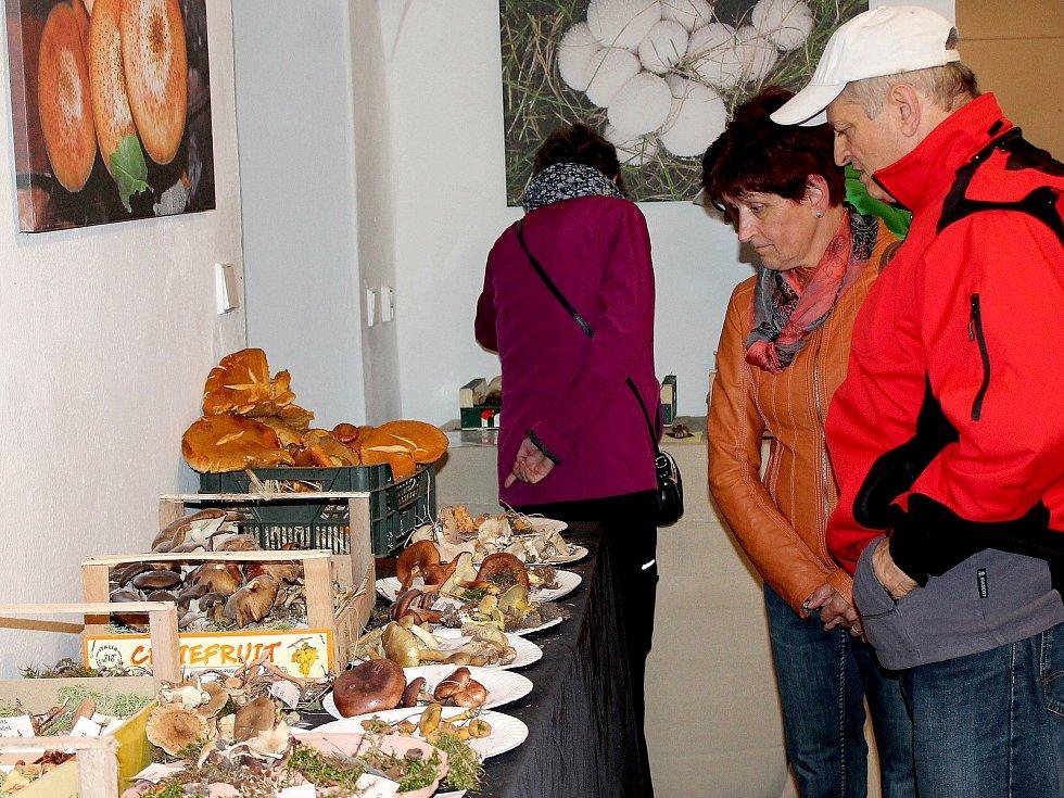 Na výstavě hub v Třeboni je k vidění na dvě stě druhů.