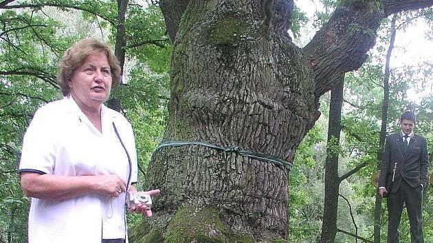 Krčínův dub na Hrádečkové hrázi v Třeboni. Spisovatelka Marie Hrušková u pasování.