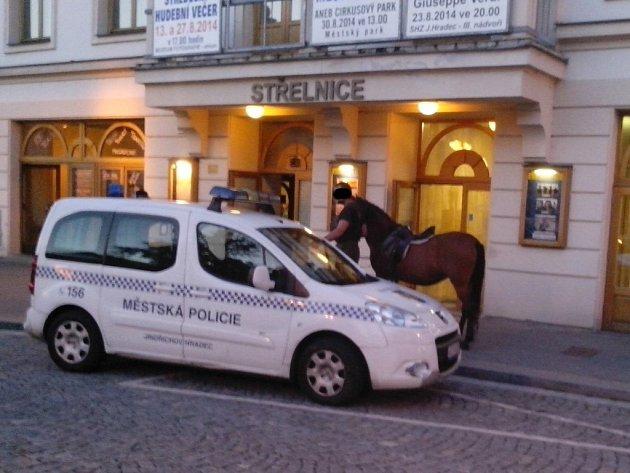KŮŇ před kulturním domem Střelnice na jindřichohradeckém Masarykově náměstí zaměstnal strážníky ve čtvrtek.