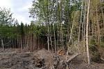Místo lesa zůstala jen měsíční krajina.