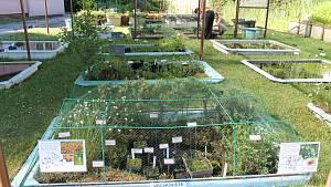 Masožravé a vodní rostliny z celého světa vystavuje Botanická zahrada Třeboň.