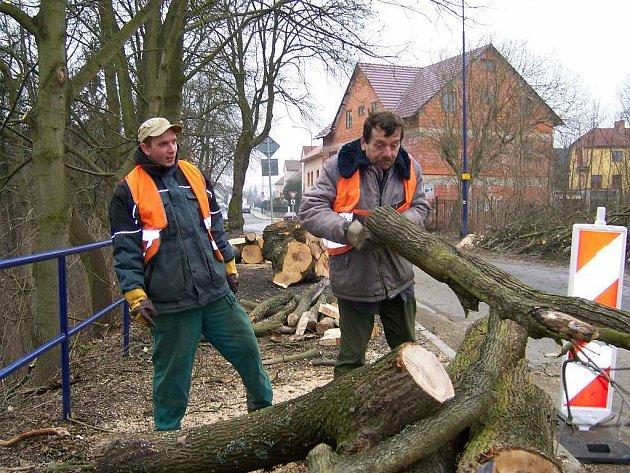 Kácení stromů v Denisově ulici v Jindřichově Hradci.