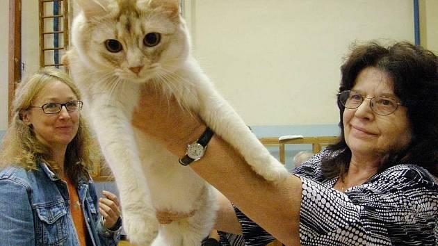 V sobotu tělocvičnu 4. základní školy v J. Hradci ovládly ušlechtilé kočky.