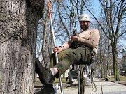 Jindřichohradečtí radní se sešli v parku a jednali o stromech.