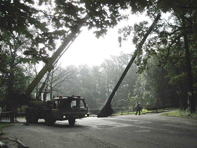 Třeboňští rybáři odstraňovali z rybníka Svět u bezpečnostního přelivu spadlý strom.