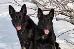 Sněhovou nadílku si užívají nejenom děti, ale i psi. Toulky okolo Jindřichova Hradce se čtyřnohými kamarády.