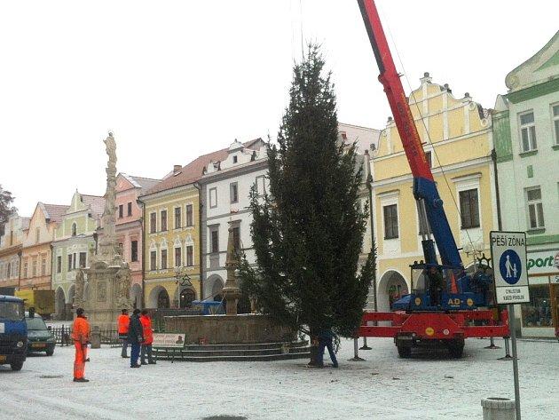 Strom na třeboňském náměstí.
