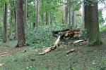 Ve spodní části Husových sadů a také v Mertových sadech na protějším břehu řeky Nežárky to vypadalo jako po tornádu.  Zem pokrývala vrstva olámaných větví a nejméně tři stromy padly přes nebo v těsné blízkosti Bratrské ulice. Další strom padnul u pekárny