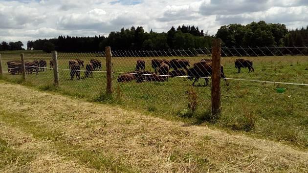 Bizoní farma v Rožnově.
