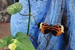 Na Lipně pěstují i exotické rostliny a hlavně nádherné motýly.