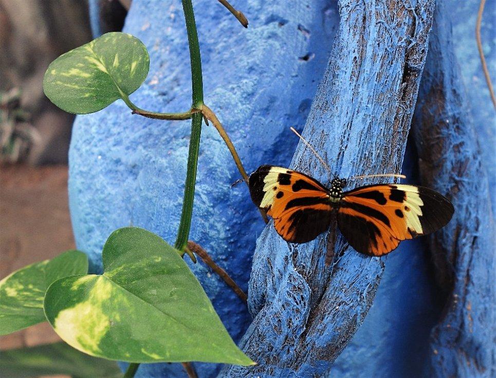 Na Lipně pěstují i exotické rostliny a hlavně nádherné motýly