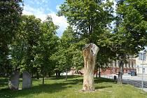 Pokáceno by mělo být torzo stromu u vchodu do Husových sadů z Kostelní ulice.