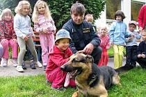 Psovodi Policie ČR z Jindřichova Hradce předvedli dětem z mateřské školky v ulici Röschova v J. Hradci, jak se cvičí policejní psi.