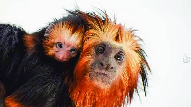 Zoo Na Hrádečku u Dolní Pěny na Jindřichohradecku se těší novým přírůstkům.