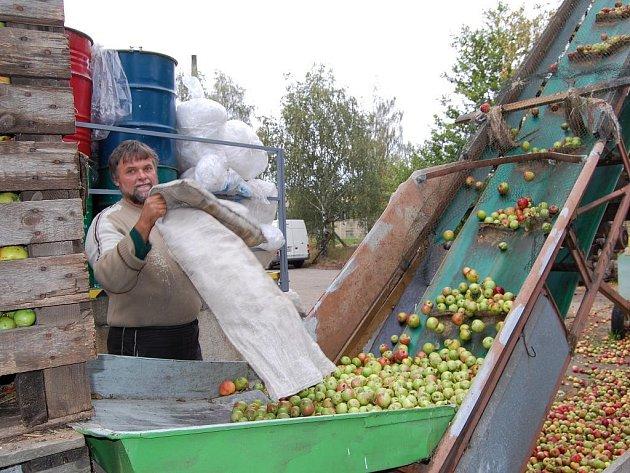 Výkup jablek v jindřichohradecké Jednotě jede jede na plné obrátky.
