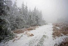 Jediní, kdo si teď počasí spojené s námrazou užívají, jsou asi psi. Pohled na ledem obtěžkané stromy na Javořici.