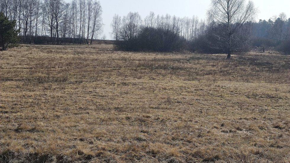 """Slunečné dny """"postrčily"""" směrem k jaru přírodu i v chráněném území přírodní památky Matenský rybník u Jindřichova Hradce."""