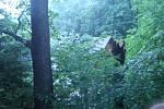 Spadlý strom na rybářskou baštu na hrázi Ratmírovského rybníka v Malém Ratmírově.