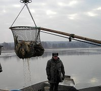 Výlov rybníku Stav v Lásenici.