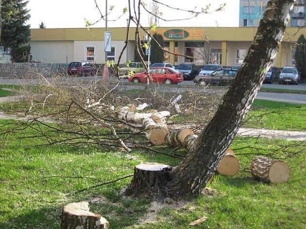 Strom na jindřichohradeckém sídlišti Vajgar se poroučel pod motorovou pilou.