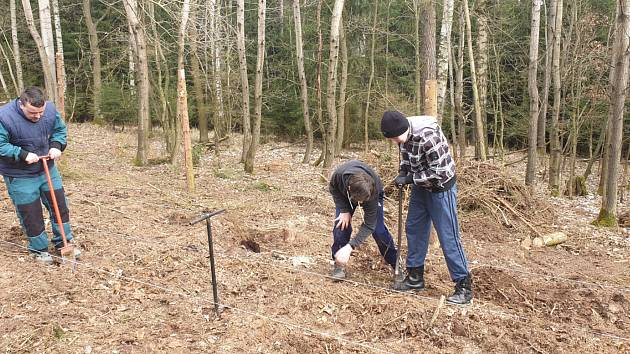 Dobrovolníci pomáhali při obnově dačického lesa.