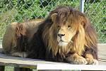 V soukromé zoologické zahradě o rozloze 11 hektarů se ošetřovatelé starají asi o 150 druhů zvířat, která jsou řazena mezi ohrožené druhy živočichů a jsou chráněna úmluvou Cites.