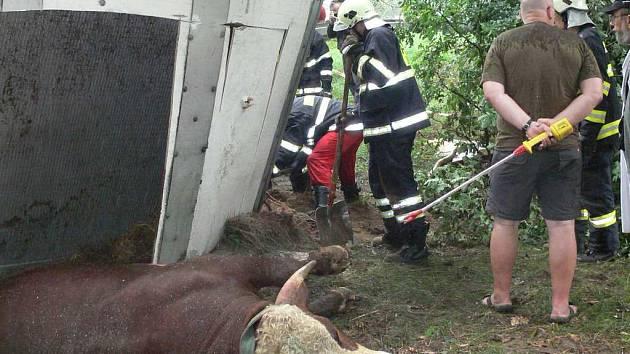Nehoda kamionu převážejícího býky u Horního Žďáru.