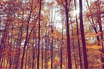 Když přijde podzim...
