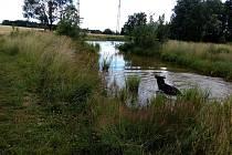 Zatím kolem rybníků mezi Kopečkem a Starou Radouňkou vede jen pěšina.