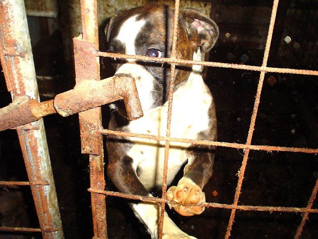 Pohled do kotců v jarošovském kravíně, kde v nevyhovujích podmínkách žije kole stovky psů.
