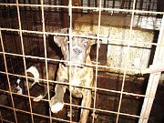 V budově bývalého vepřína chová Zdena Bártů kolem třiceti psů. Objekt odkoupila od zemědělského družstva. V místě ale není zavedena ani elektřina, ani voda. Tamní obyvatelé se obávají o další osud zvířat. Žena už se v minulosti několika chyb dopustila.