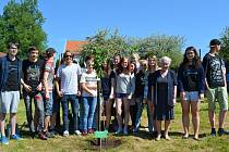 V Kunžaku vysadili žáci základní školy třešeň jako památku na Sira Nicholase Wintona.