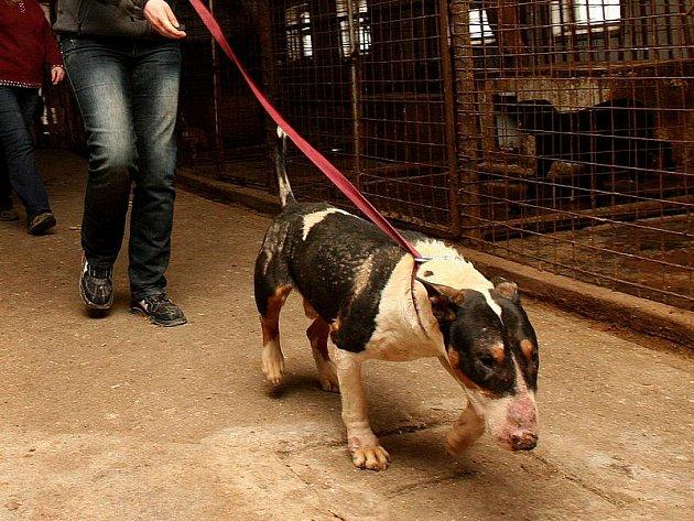 V březnu 2008 nejenom kynologickou veřejností otřásla kauza týrání psů v Jarošově nad Nežárkou. Díky pomoci řady dobrovolných zachránců se podařilo většině nemocných psů, kteří žili v otřesných podmínkách kravína, najít nový domov.