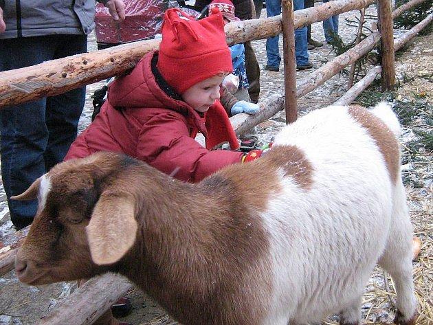 Na jindřichohradeckém zámku si vánoční atmosféru užívají hlavně děti, které jako magnet přitahují zvířata v ohradě.